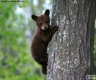 Cucciolo di orso bruno si arrampica su un albero