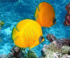 Pesce farfalla limone