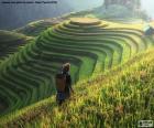 Terrazze di riso, Thailandia