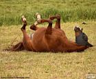 Preferendo cavallo