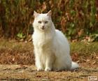 Gatto bianco che si siede