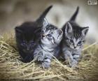 Gattini svegli