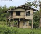 Vecchia casa nella foresta