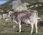 Mucca in alta montagna