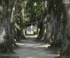 Alberi di grandi dimensioni, Brasile