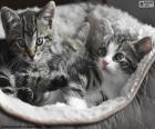 Due gattini svegli