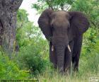 Grande elefante nel bosco