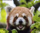 Faccia panda rossa