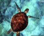 Rompicapo di Tartaruga d'acqua color cielo
