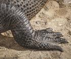 Piede di coccodrillo