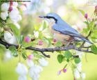 Uccello azzurro cielo
