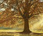 Albero deciduo in autunno