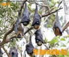 Giorno dell'apprezzamento dei pipistrelli