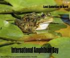 Giornata internazionale per la conservazione degli anfibi
