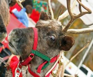 Rompicapo di Renna di Natale con un collare con campanellini