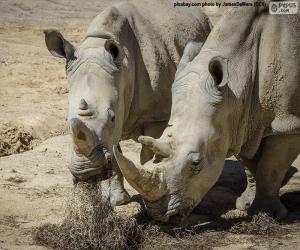 Rompicapo di Rhino mangiare