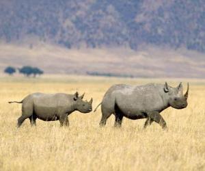 Rompicapo di Rinoceronti neri nella savana