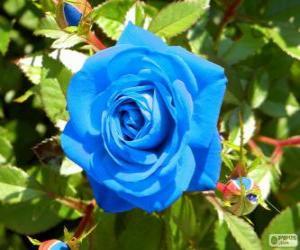 Rompicapo di Rosa blu