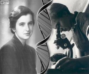 Rompicapo di Rosalind Franklin (1920-1958), pioniere nella ricerca del DNA