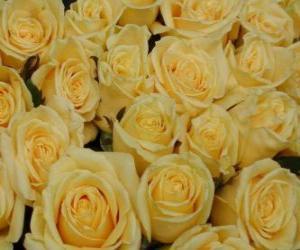 Rompicapo di Rose gialle aperte