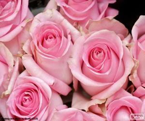 Rompicapo di Rose rosa