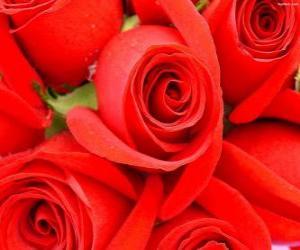 Rompicapo di Rose rosse aperte