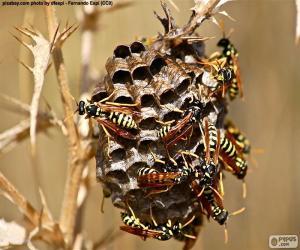 Rompicapo di Sciame di vespe