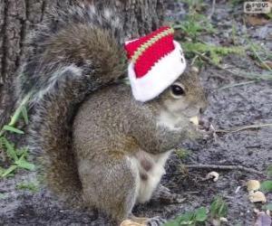 Rompicapo di Scoiattolo con il cappello di Babbo Natale