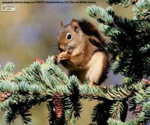 Rompicapo di Scoiattolo rosso su un albero