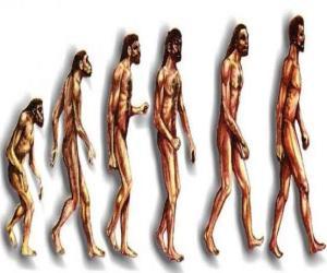 Rompicapo di Sequenza di evoluzione umana da australopithecus Lucy per l'uomo moderno passando tra gli altri da uomini di Heidelberg, Pechino, Neanderthal e Cromagnon