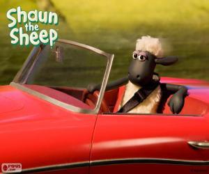 Rompicapo di Shaun guidare una macchina