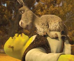Rompicapo di Shrek e Ciuchino, fissando