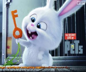 Rompicapo di Snowball, un coniglio bianco