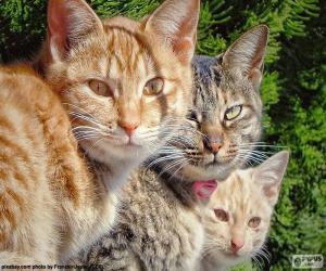 Rompicapo di Stare tre gatti