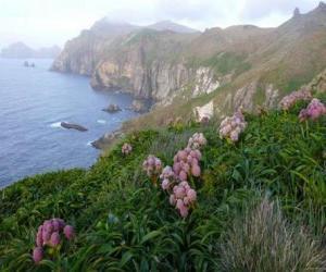 Rompicapo di Subantartica isole, che comprende le isole di insidie, Bounty, Antipodi, Auckland e Campbell, che si trova nell'Oceano meridionale, a sud-est della Nuova Zelanda.