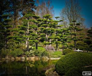 Rompicapo di Sugi o cedro giapponese