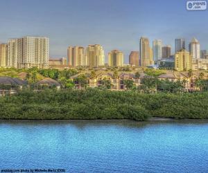 Rompicapo di Tampa, Stati Uniti d'America
