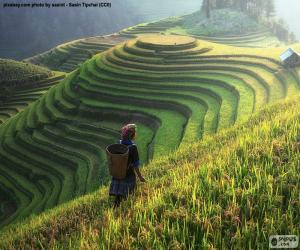 Rompicapo di Terrazze di riso, Thailandia