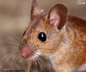 Rompicapo di Testa del mouse