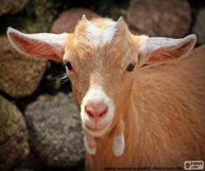 Rompicapo di Testa della capra