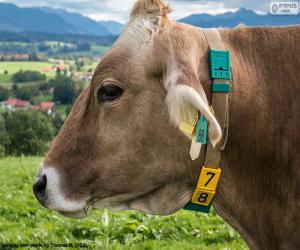 Rompicapo di Testa della mucca