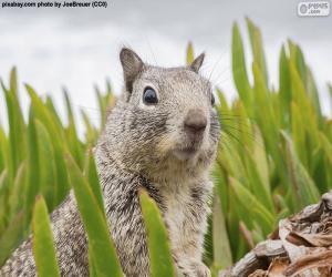 Rompicapo di Testa dello scoiattolo