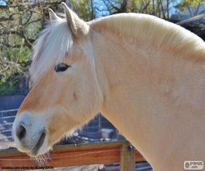 Rompicapo di Testa di cavallo beige