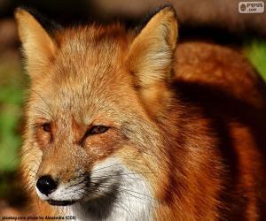 Rompicapo di Testa di Fox