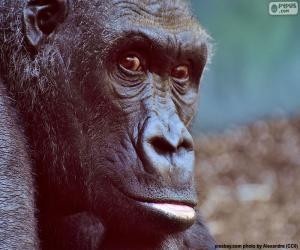 Rompicapo di Testa di Gorilla