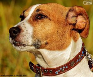 Rompicapo di Testa di Jack Russell Terrier