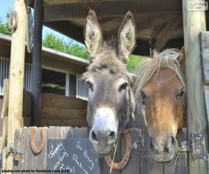 Rompicapo di Teste d'asino e pony