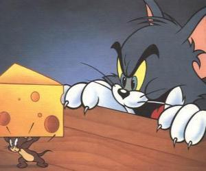 Rompicapo di Tom il gatto sorprendente il topo Jerry prendere un pezzo di formaggio