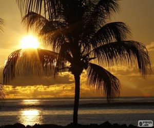 Rompicapo di Tramonto, Palm