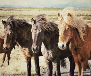 Rompicapo di Tre cavalli islandesi